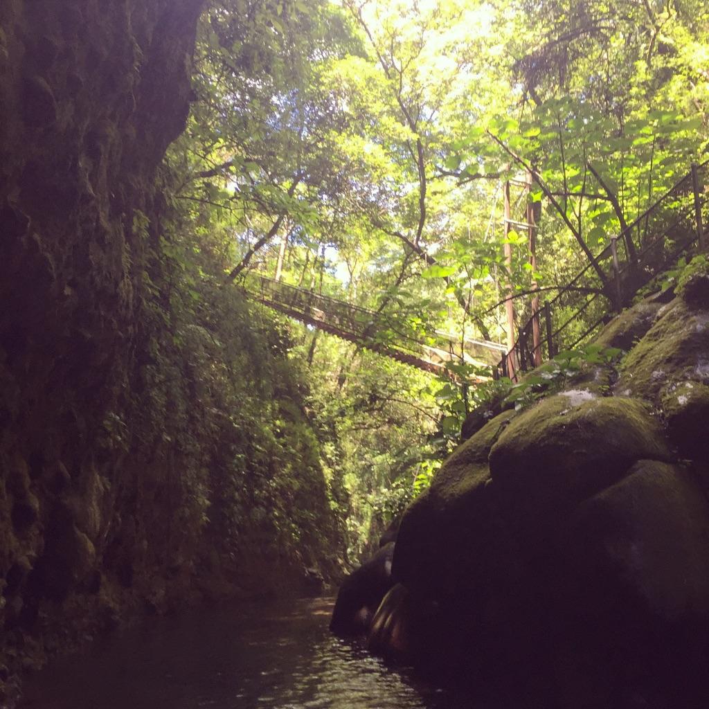 jungle rincon de la vieja