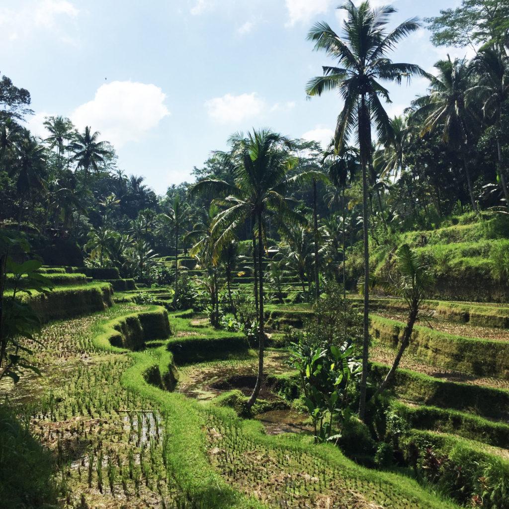 rizière ubud bali