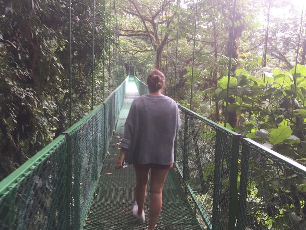 Monteverde jungle