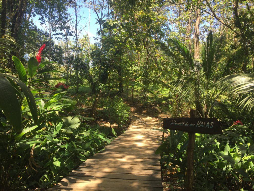 isla bastimiento jungle