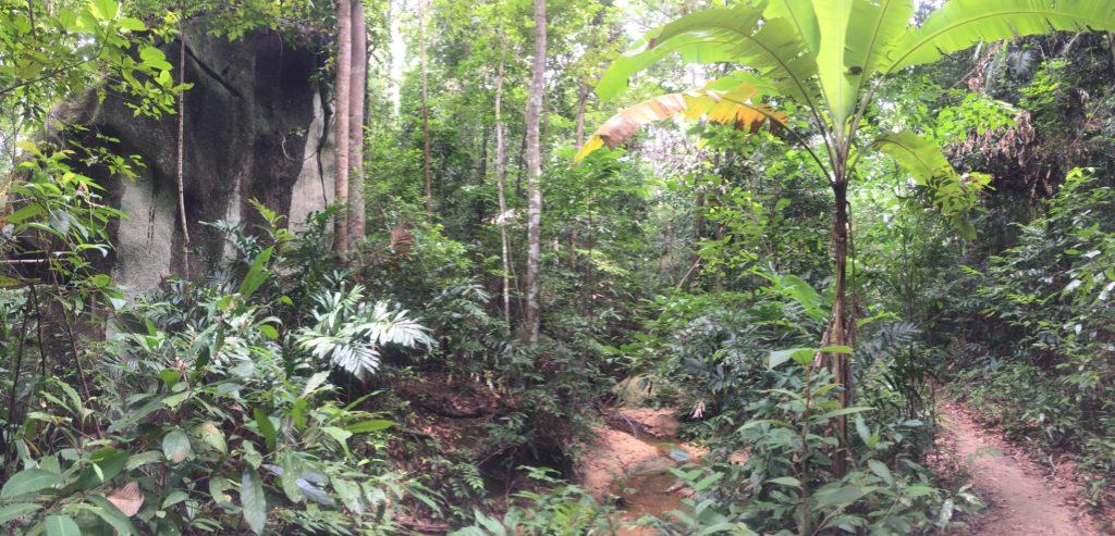 trek malaisie