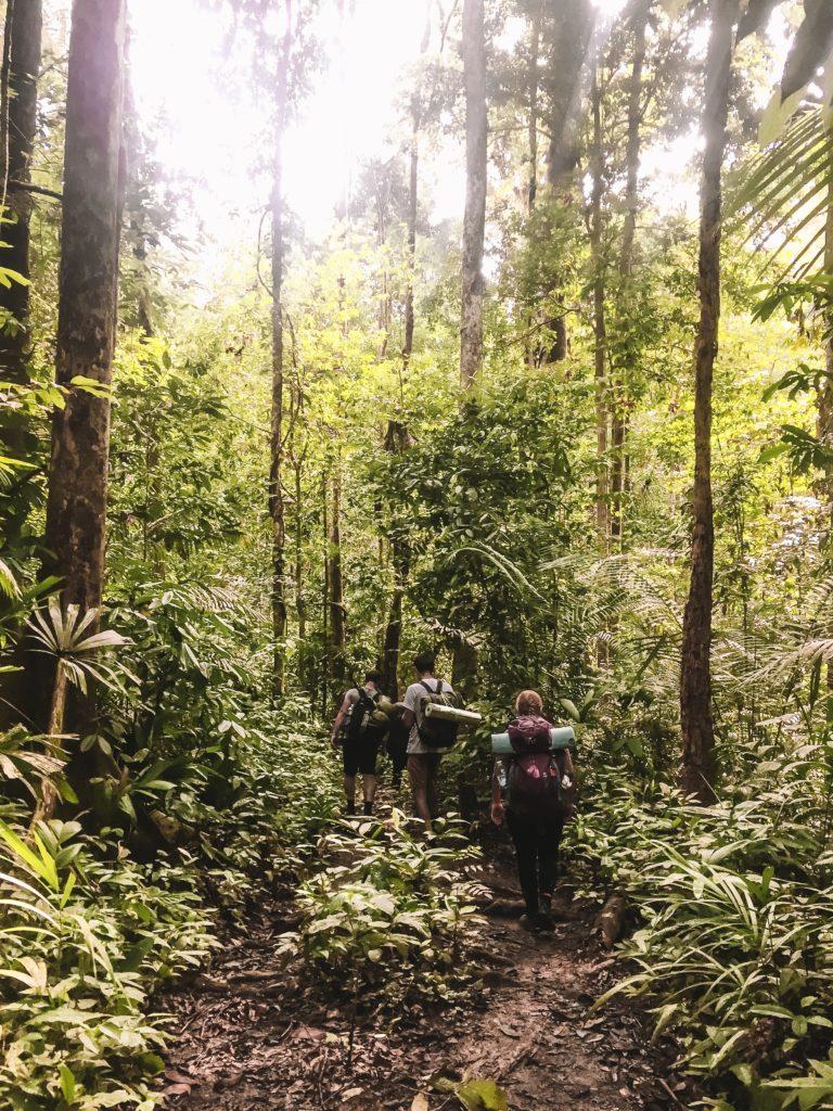 jungle de taman negara