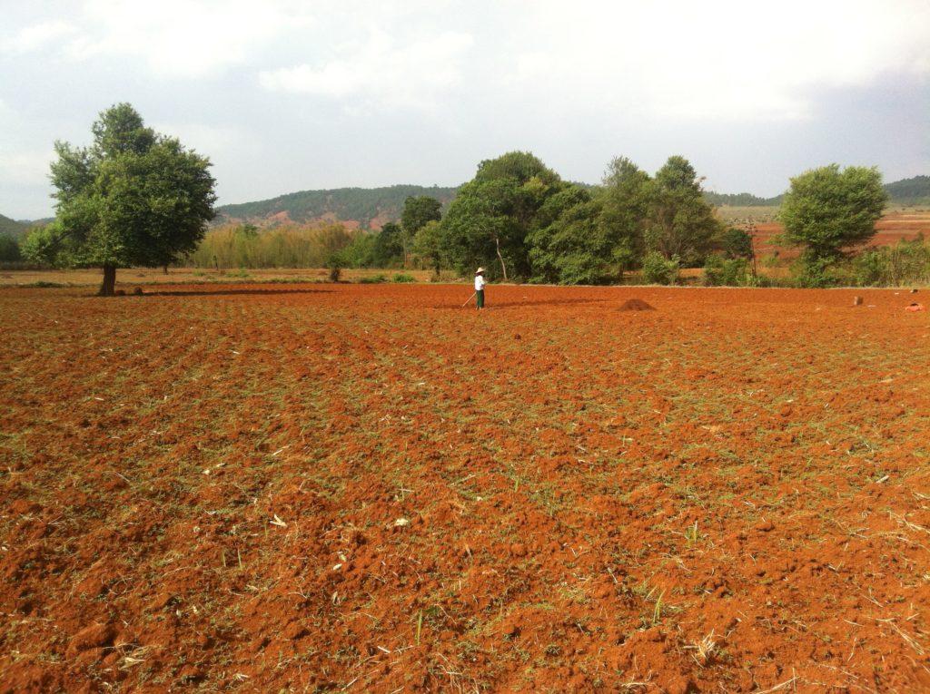 paysan dans les champs