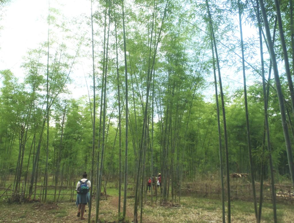 chemin à travers les bambou
